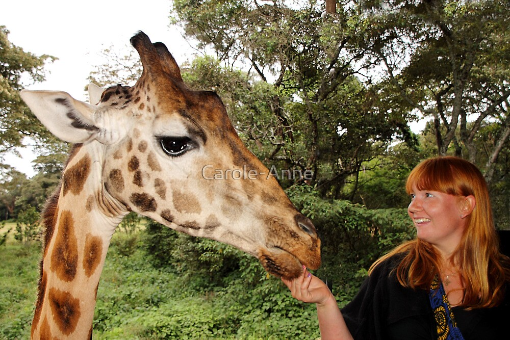 """Yes! I am this big!"" Rothschild's Giraffe, Giraffe Centre, Nairobi, Kenya by Carole-Anne"