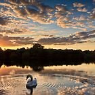 swan lake by timmburgess