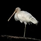 The Spoonbill by Lance Leopold