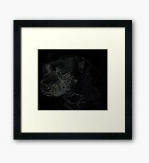 Staffordshire Bull Terrier, Portrait Framed Print