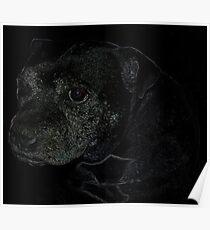 Staffordshire Bull Terrier, Portrait Poster