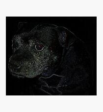 Staffordshire Bull Terrier, Portrait Photographic Print
