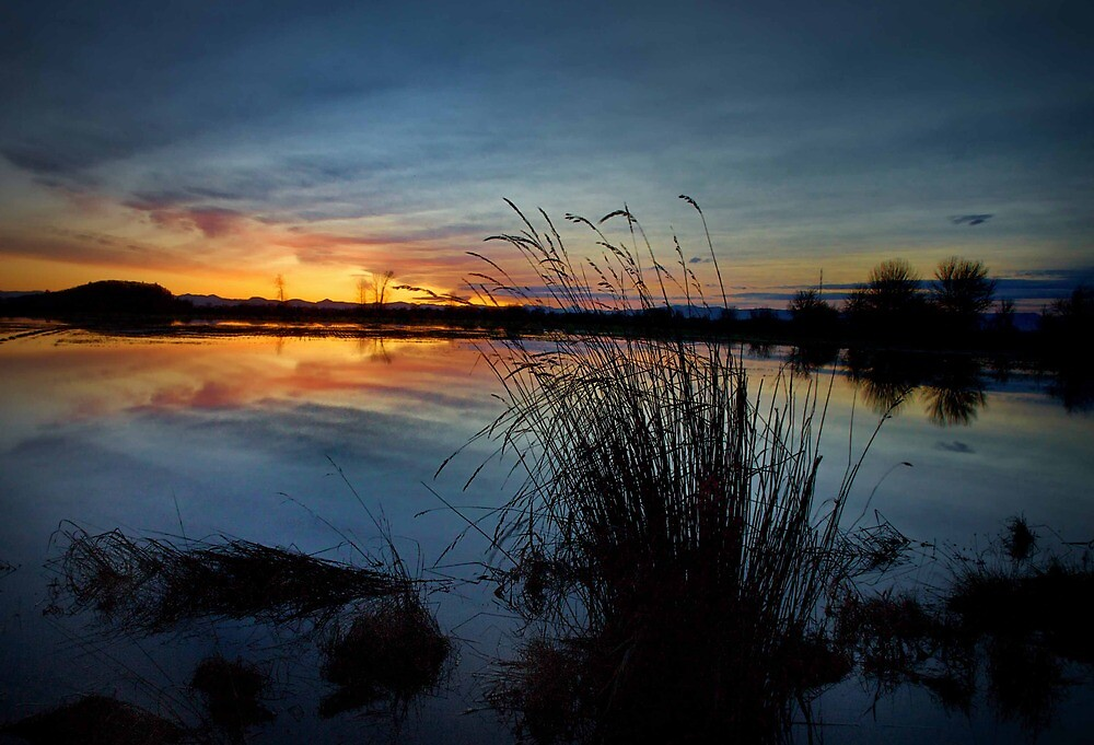 Sunrise At The Pond by Charles & Patricia   Harkins ~ Picture Oregon