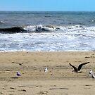 Birds at Virgina Beach by deegarra