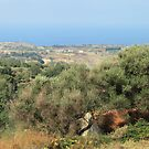 From the hills to the sea, Calabria by catiapancani