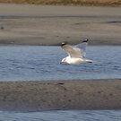 Seagull in the Marsh by betsy8897