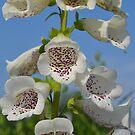 White Foxgloves by betsy8897