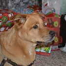 Dog among the Christmas Presents by betsy8897