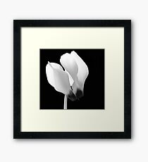 Cyclamen Flower Framed Print