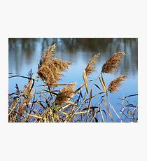 Water Brush Photographic Print
