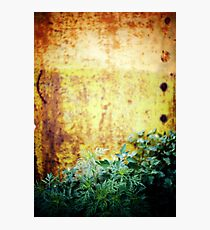 green grass Photographic Print