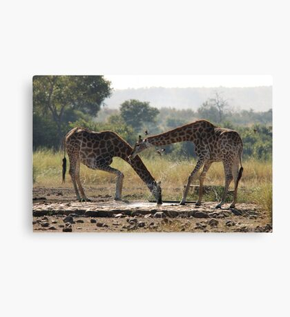 A LONG WAY TO GO FOR A THIRSTY GIRAFFE  ! - GIRAFFE – Giraffa camelopardalis Canvas Print