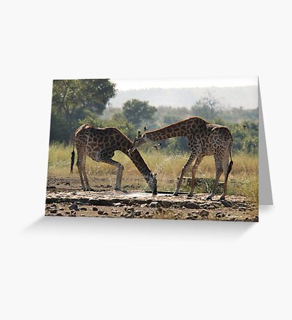 A LONG WAY TO GO FOR A THIRSTY GIRAFFE  ! - GIRAFFE – Giraffa camelopardalis Greeting Card