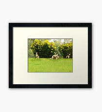 Kangaroos in the green Framed Print