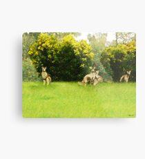 Kangaroos in the green Metal Print