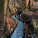 Creek by Patrick Metzdorf
