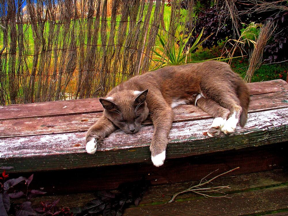 SLEEPY CAT by Kenneth Caleno