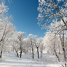 Winter morning frosty trees by Jeff Hathaway