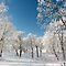 """""""A Winter Wonderland"""" ($20 Voucher Challenge)"""
