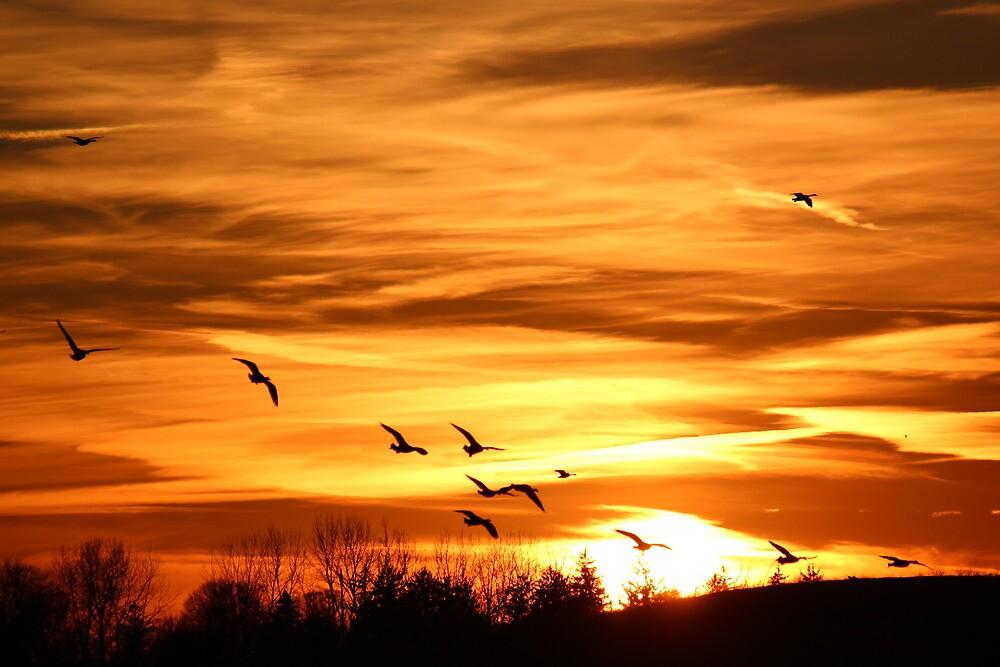 Sunset Flyers by Rosanne Jordan