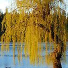 Lost Lagoon - Park Bench and Willow Tree by jadennyberg