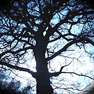 Spooky Trees by andonsea