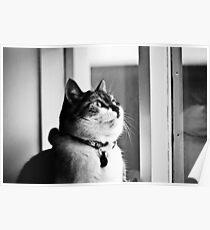 Loppa my cat Poster
