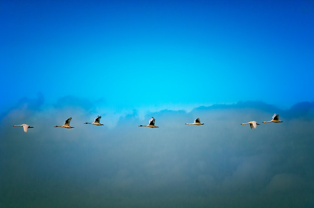 The 7 Swans by THHoang