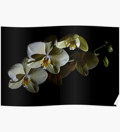 Orchids in the Dark Poster