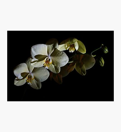 Orchids in the Dark Photographic Print