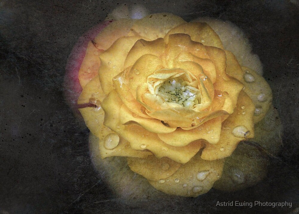 Textured Ranunculus by Astrid Ewing Photography