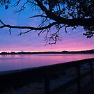 Arbutus over Bay by Tracy Riddell