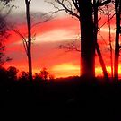 Sunrise at Nancy's by Jamie  Armbruster