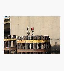 Goose on Barge Bumper Photographic Print