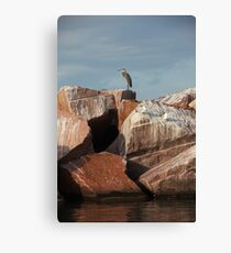 Great Blue Heron on Red Rock Canvas Print