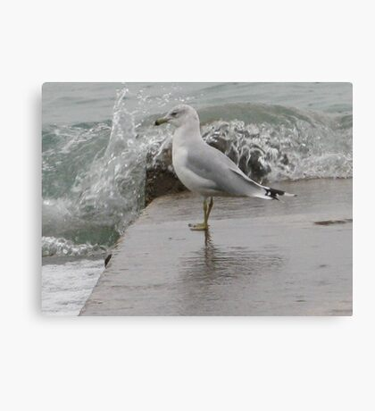 Seagull on end of pier. Canvas Print