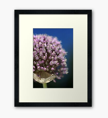 Garlic Flower Framed Print