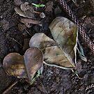 Hearts by Barbara Morrison