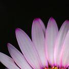 Pink petals in the dark by aaronnaps