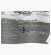 Sharks swarm Mon Repos Poster