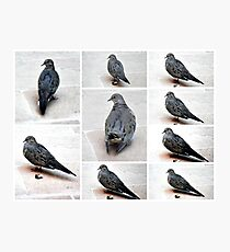 A COLLAGE OF A MOURING DOVE IN THE GARDEN Photographic Print