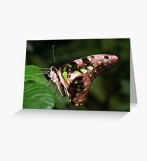 Underside of a Tailed Jay - Graphium agamemnon Greeting Card