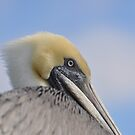 PELICAN ON ROOF by FSULADY