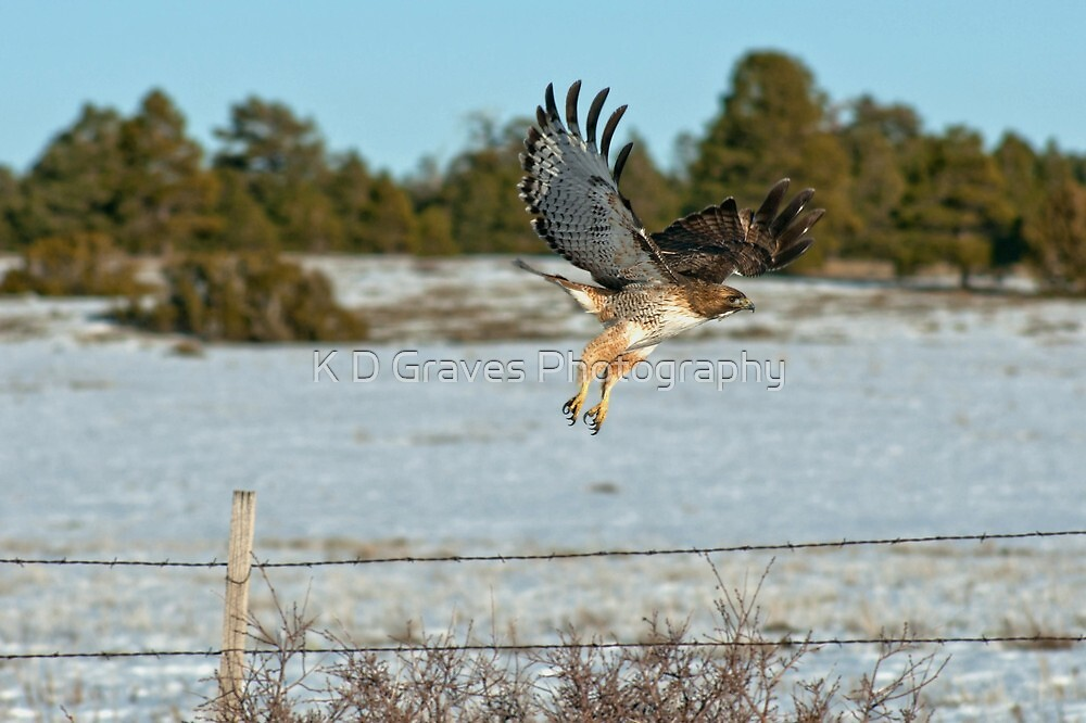 Coming Down For a Landing by K D Graves Photography
