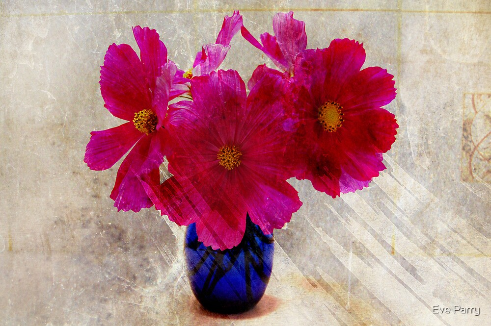 Pink Cosmos by Eve Parry