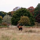 Autumn Deer by mpstone