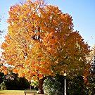 Beautiful Tree by Shulie1