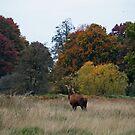 Deer from rear by mpstone