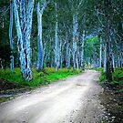 Booie Dirt Road by Tracie Louise