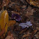 Purple rain... by orkology